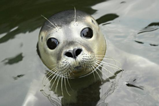 the-scottish-sea-life