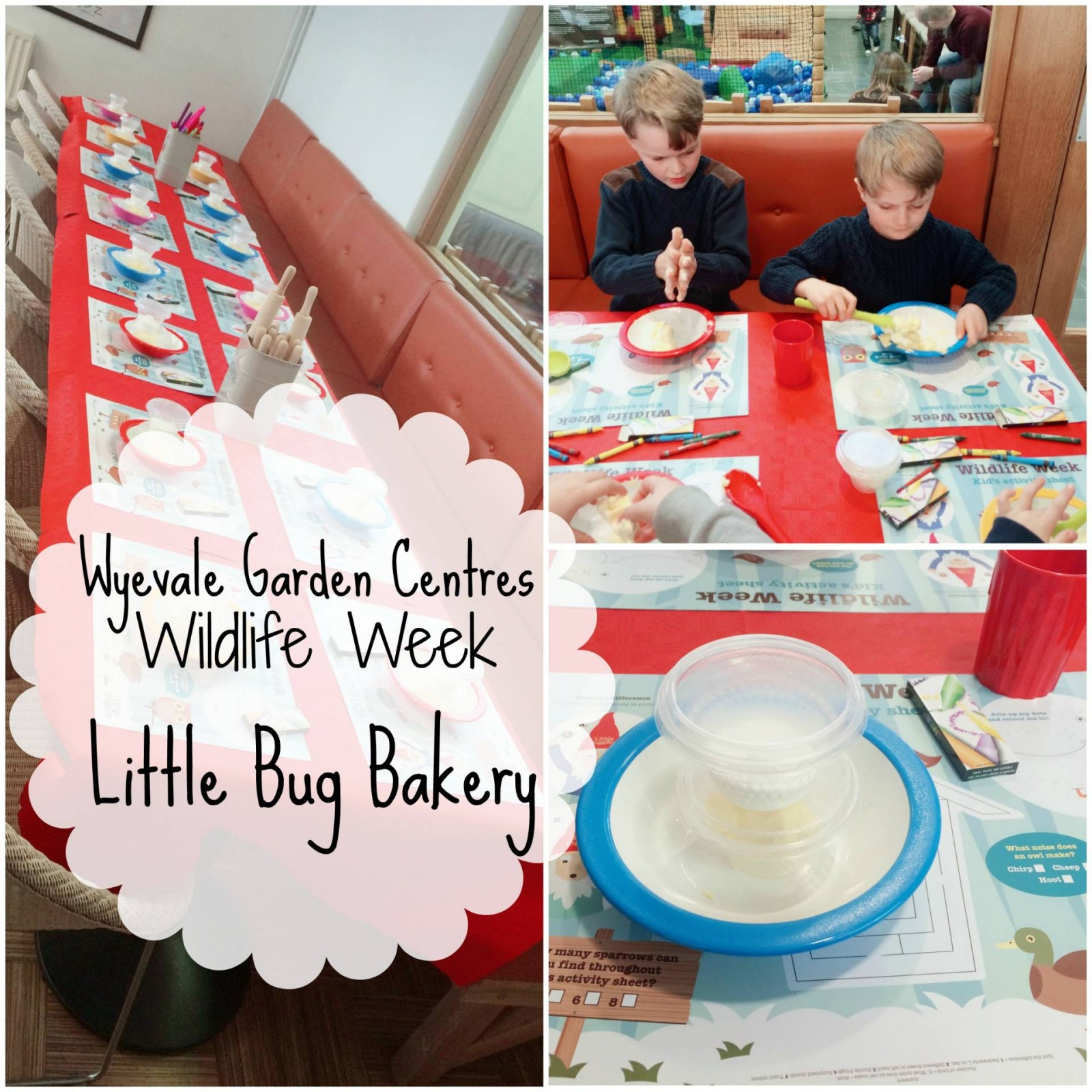 Little bug bakery at Wildlife week with Wyvale garden centres