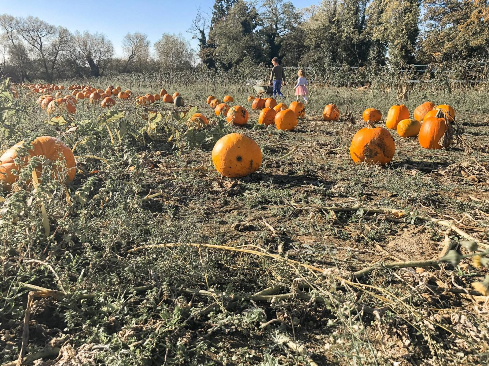 3 Birthdays, Pumpkin Picking And Changing Seasons – October Little Loves