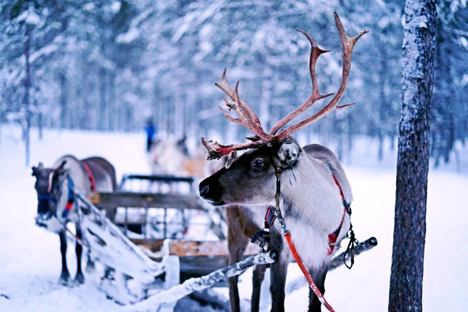 Visit Lapland For A Magical Winter Family Holiday