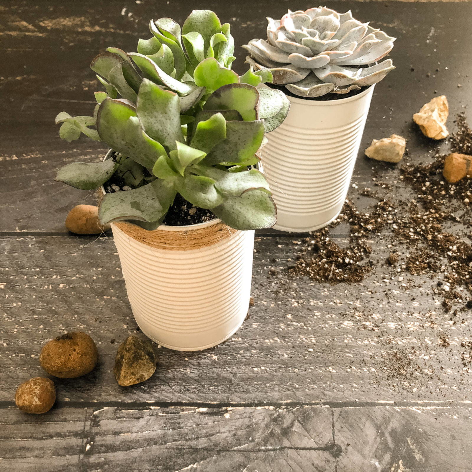 How To Make Upcycled Tin Can Planters