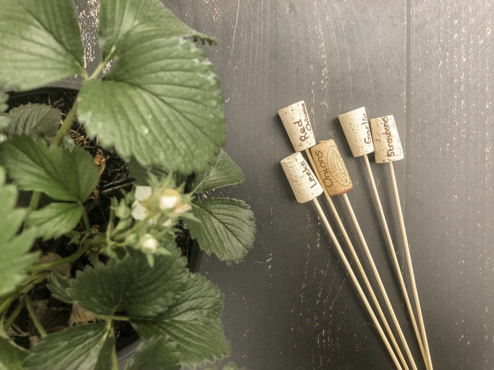 wine cork plant markers