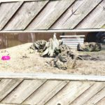 Hamerton Zoo Review and Video Plus win a family ticket